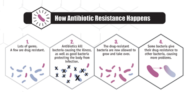 A few bacteria are drug resistant and are allowed to grow and take over.
